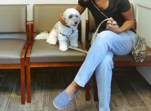 Woman Reassures Dog at Vet