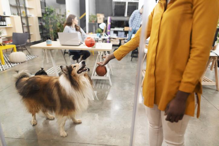 coronavirus prevention dogs