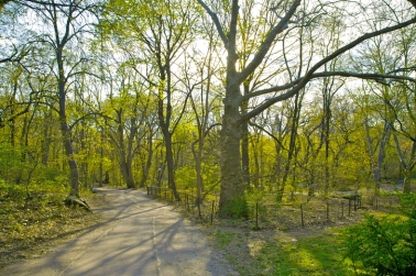 Path through the Ramble in spring, Central Park, New York, New York