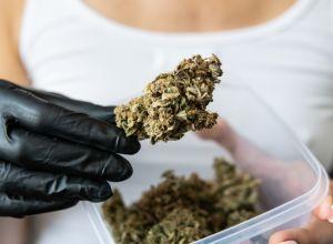 black women in cannabis